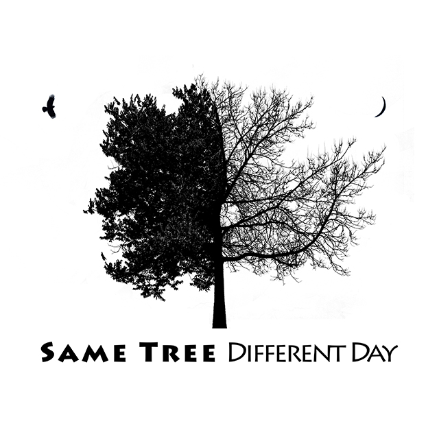 Same Tree, Different Day